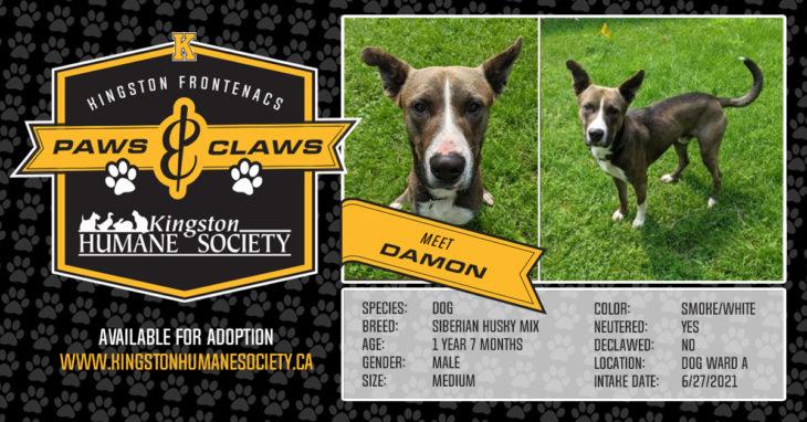 Meet Damon